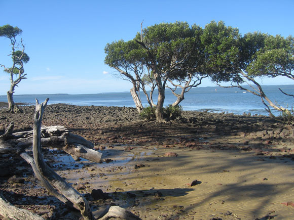 Coochiemudlo Island Qld